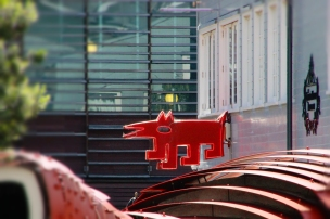 Red Dog Wellington NZ